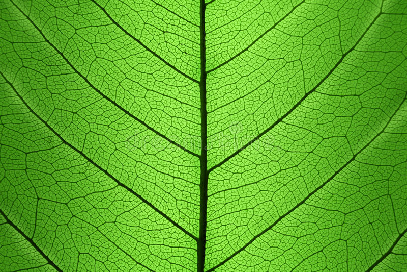 Achtergrond van de Groene structuur van de Bladcel - natuurlijke textuur royalty-vrije stock afbeelding