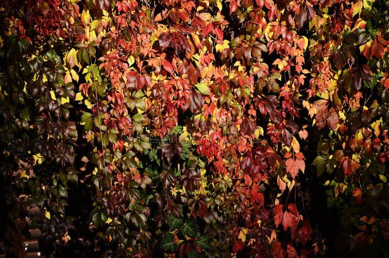 Achtergrond van de herfst multicolored bladeren royalty-vrije stock fotografie