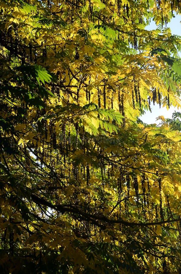 Achtergrond van de herfst multicolored bladeren royalty-vrije stock foto's