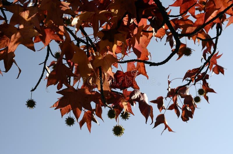 Achtergrond van de herfst multicolored bladeren stock afbeelding