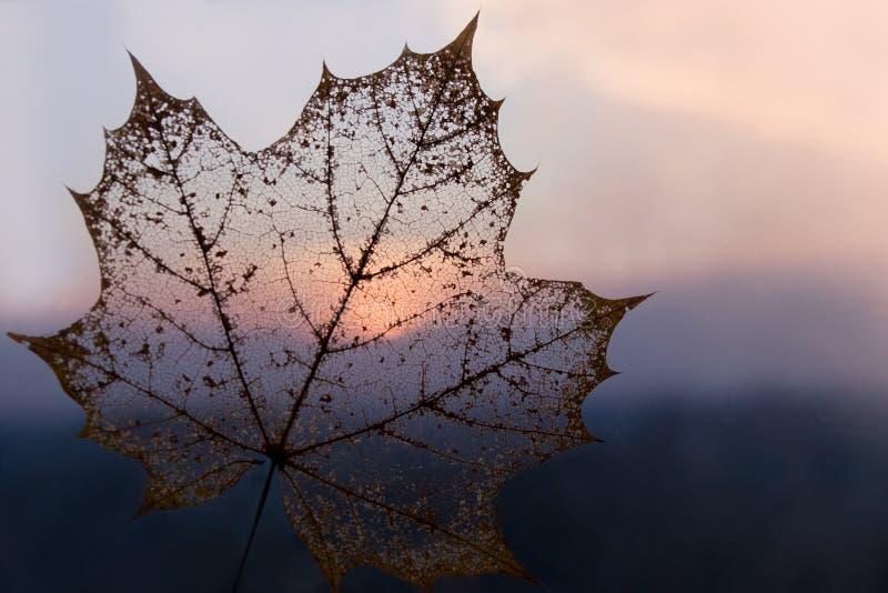 Achtergrond van de het bladkleur van het de herfst de transparante skelet royalty-vrije stock fotografie