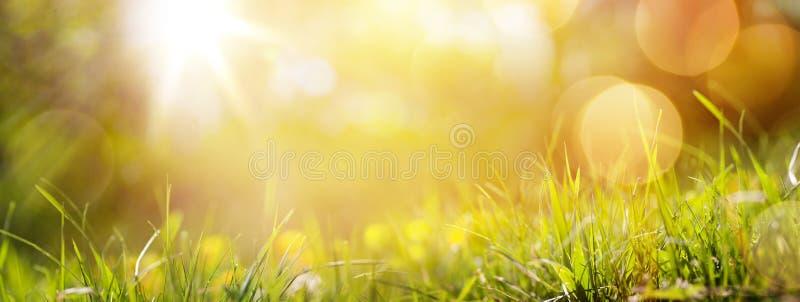 Achtergrond van de kunst de abstracte lente of de zomerachtergrond met vers g royalty-vrije stock foto's