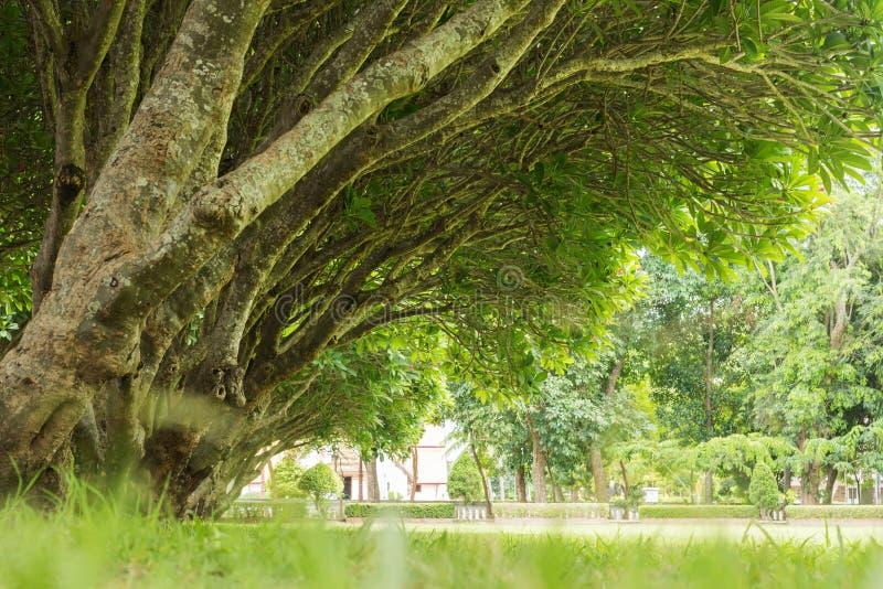 Achtergrond van de landschaps de groene bosaard stock foto