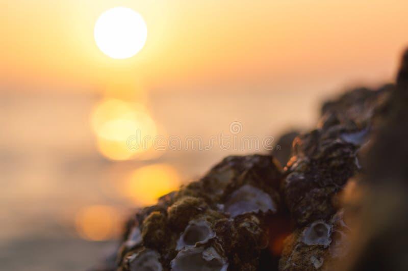 Achtergrond van de onduidelijk beeld de kleurrijke zonsondergang met shell op de rotsclose-up, abstracte aard royalty-vrije stock fotografie