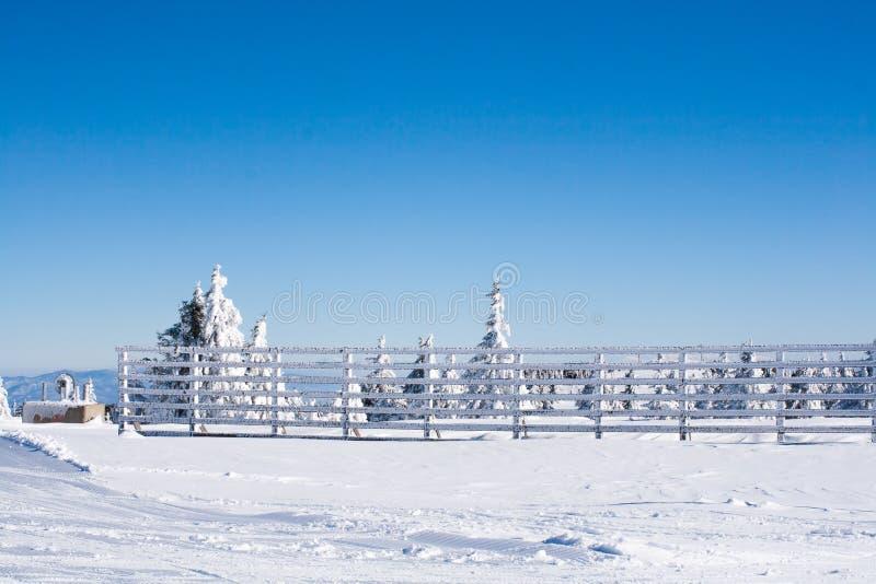 Achtergrond van de vakantie de landelijke winter met witte pijnbomen, omheining, sneeuwgebied, bergen royalty-vrije stock afbeeldingen