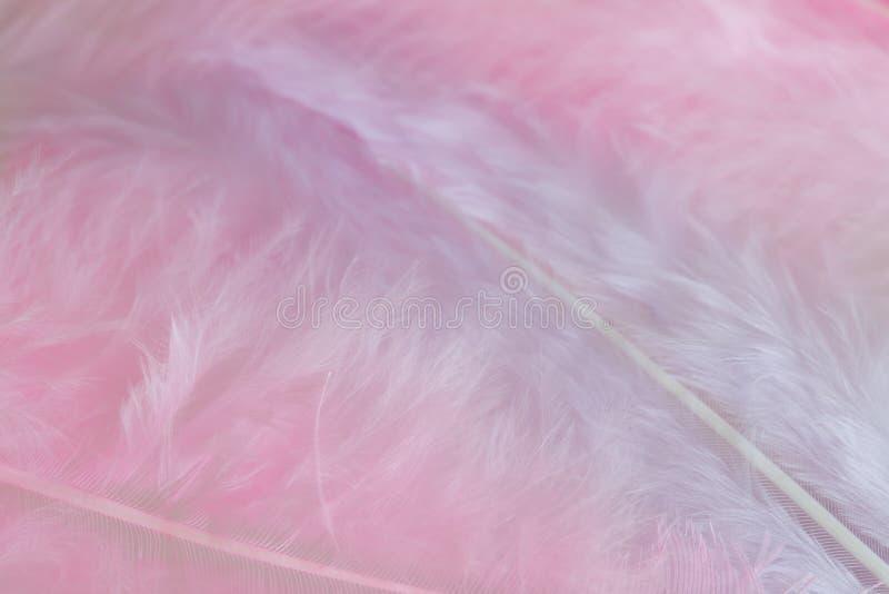 Achtergrond van dicht omhooggaand beeld van pastelkleur roze veren stock foto's
