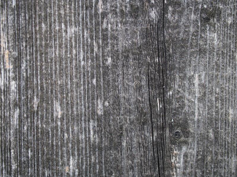 Achtergrond van Doorstane Ceder stock afbeelding