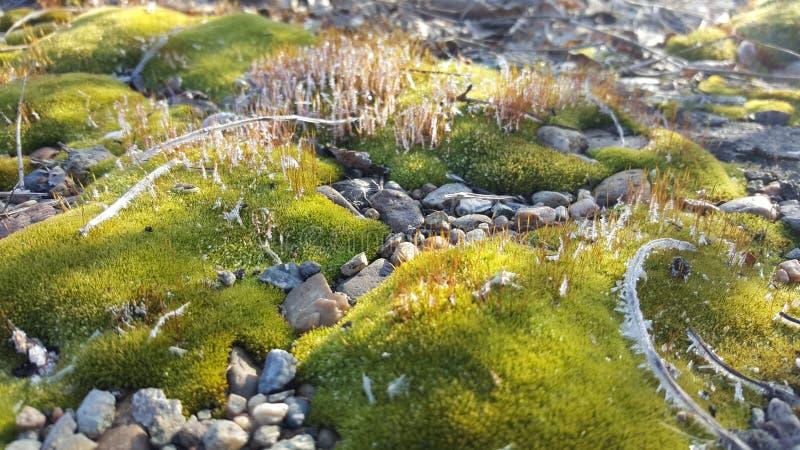 Achtergrond van een foto van gras na de de eerste herfstvorst stock afbeelding