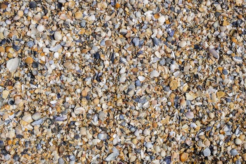 Achtergrond van gebroken en gehele shells stock fotografie