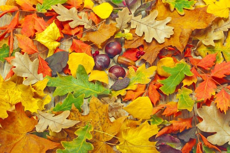 Achtergrond van gevallen de herfstbladeren dat wordt gemaakt royalty-vrije stock fotografie
