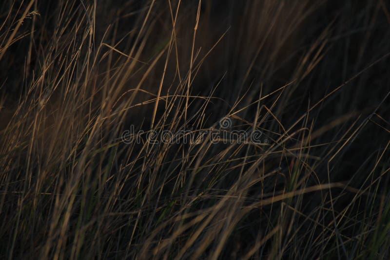 Achtergrond van gras stock fotografie