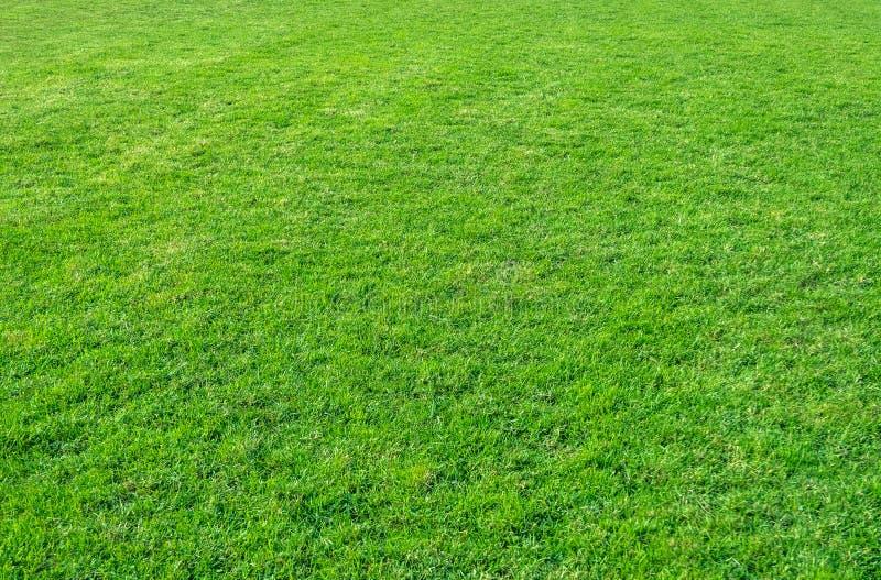 Achtergrond van groen grasgebied Groene graspatroon en textuur royalty-vrije stock afbeeldingen