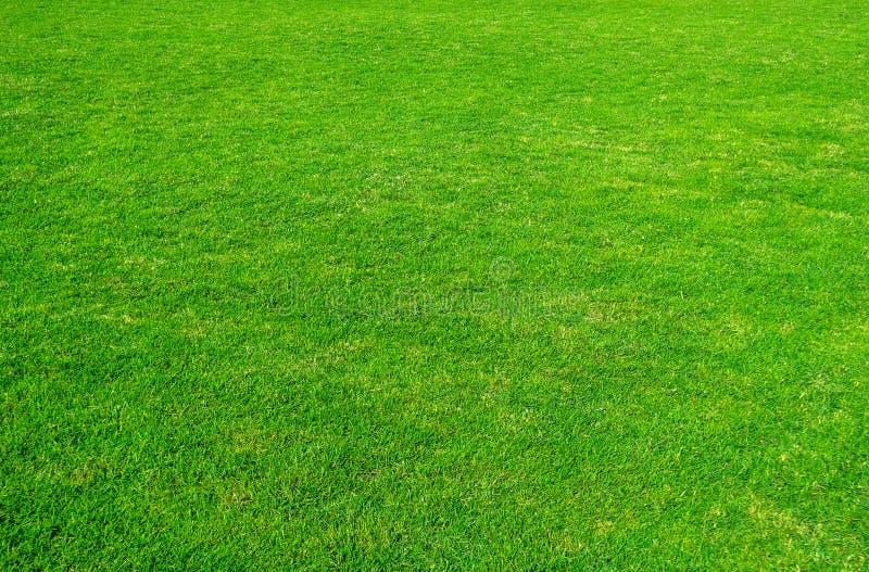 Achtergrond van groen grasgebied Groene graspatroon en textuur Groen gazon voor achtergrond stock afbeeldingen