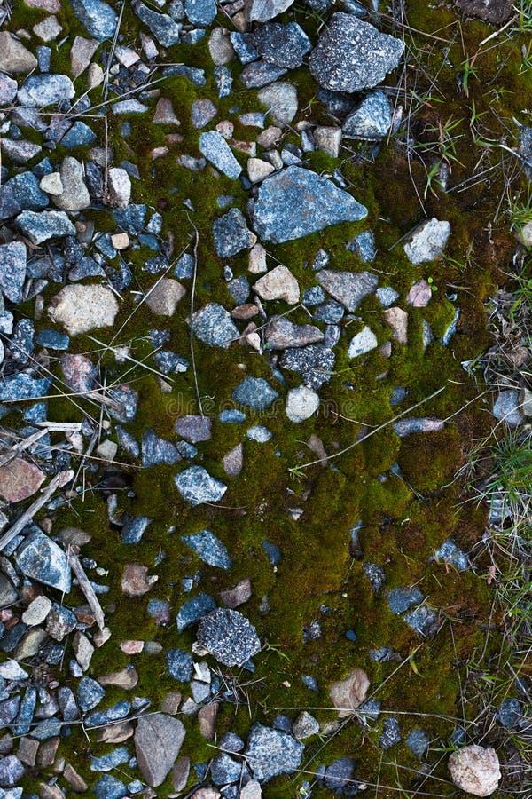 Achtergrond van groen mos Naadloze Textuur Tileable royalty-vrije stock afbeelding