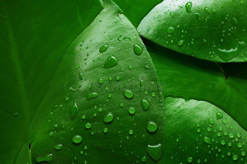 Achtergrond van groene natte bladeren stock foto's