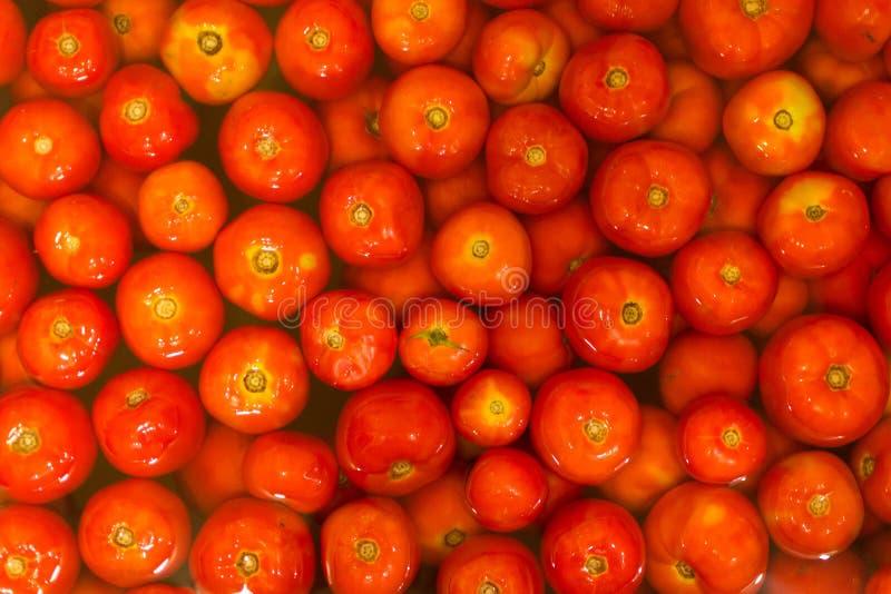 Achtergrond van heel wat rijpe rode tomaten stock afbeelding