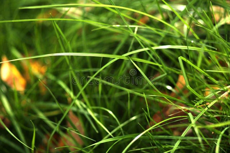 Achtergrond van heldergroen gras met gele bladeren stock afbeeldingen