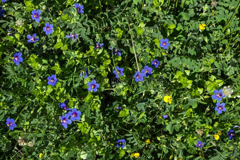 Achtergrond van hemel de blauwe kleine bloemen De achtergrond van de bloemenzomer royalty-vrije stock afbeelding