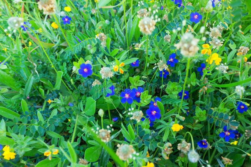 Achtergrond van hemel de blauwe kleine bloemen De achtergrond van de bloemenzomer royalty-vrije stock afbeeldingen