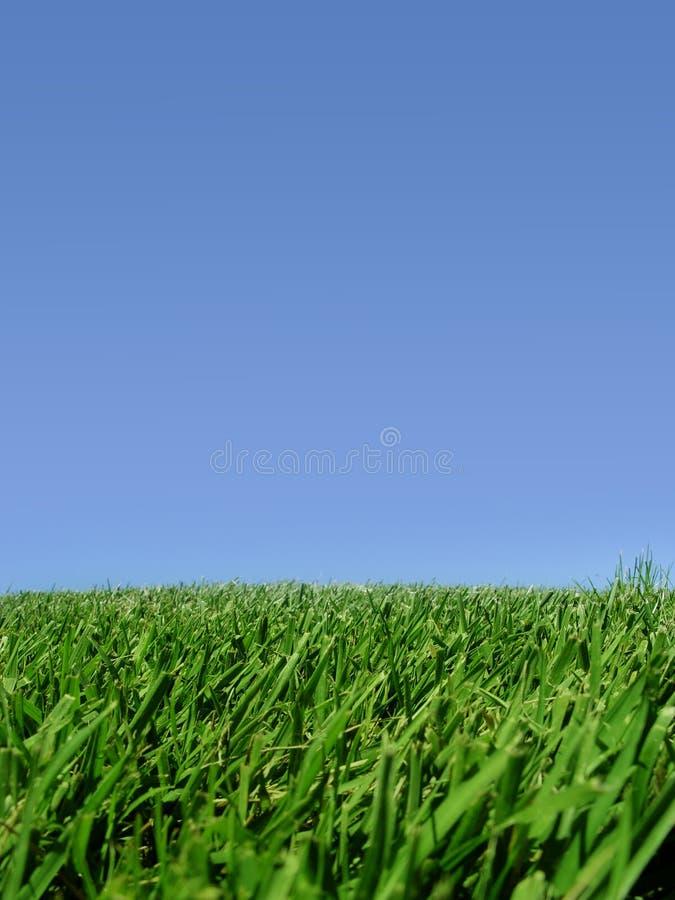 Achtergrond van hemel en gras stock afbeelding