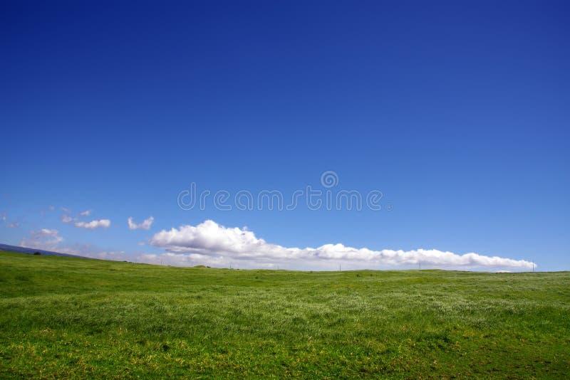 Achtergrond van hemel en gras royalty-vrije stock foto