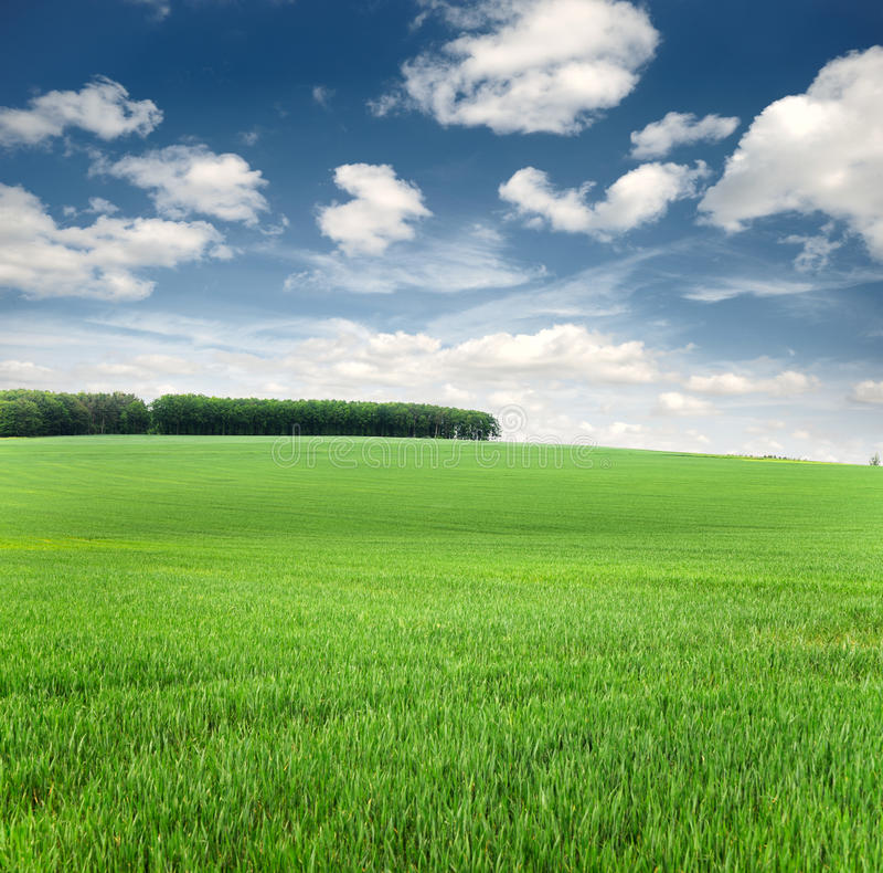 Achtergrond van hemel en gras royalty-vrije stock foto's