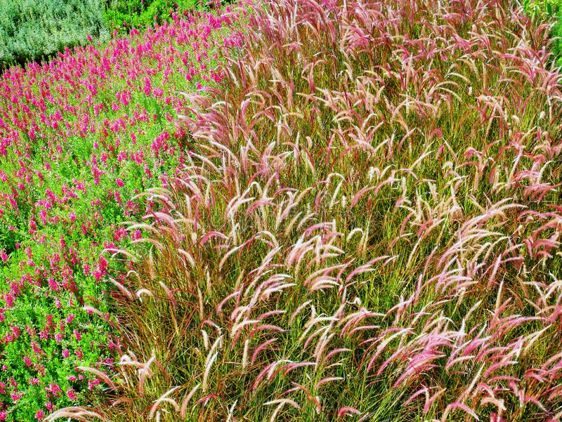 Achtergrond van Kleurrijk Bloemen en Palea-Gebied royalty-vrije stock foto