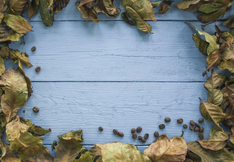Achtergrond van koffiebladeren en zaden royalty-vrije stock foto