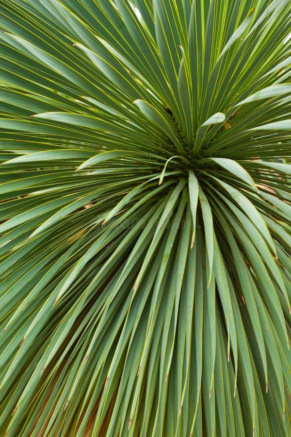 Achtergrond van palmbladen stock foto