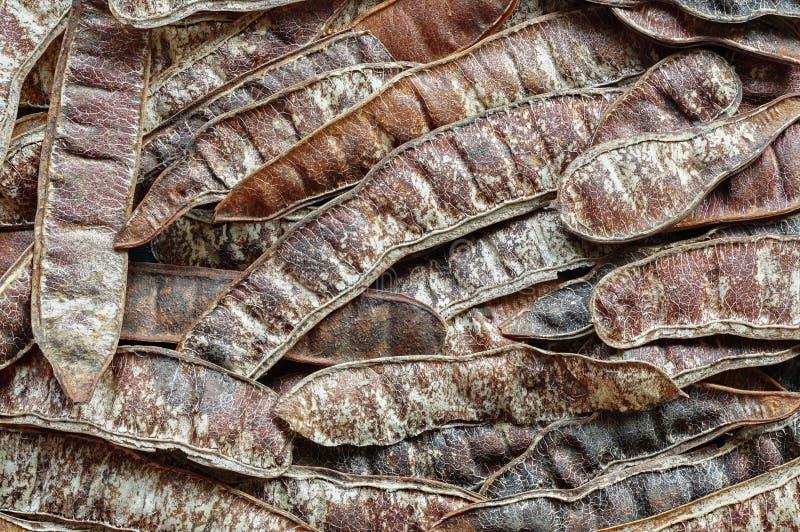 Achtergrond van peulvruchten van Robinia-pseudoacacia Valse acacia Zwarte sprinkhaan stock foto