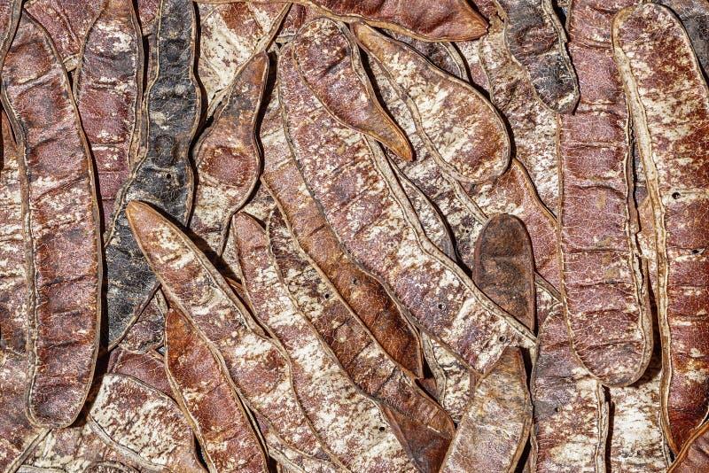 Achtergrond van peulvruchten van Robinia-pseudoacacia Valse acacia Zwarte sprinkhaan stock afbeelding