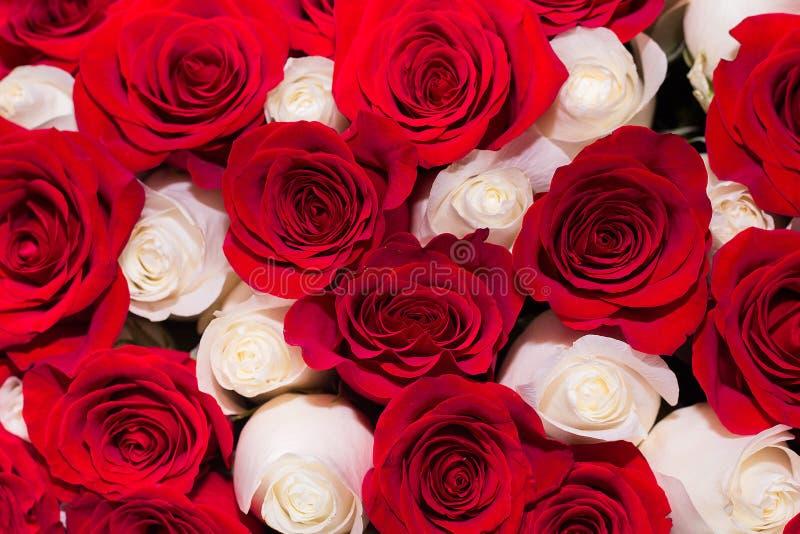 achtergrond van rode en witte rozen stock afbeelding