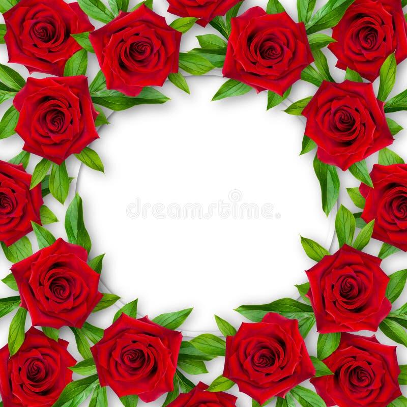 Achtergrond van rode rozen en groene bladeren rond op een witte achtergrond Uitstekende stijl Model royalty-vrije stock fotografie