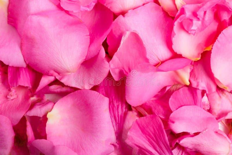Achtergrond van roze bloemblaadjes royalty-vrije stock fotografie