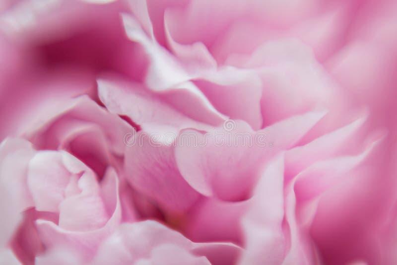 Achtergrond van Roze Bloemen Textuur Macro fotografie royalty-vrije stock afbeeldingen