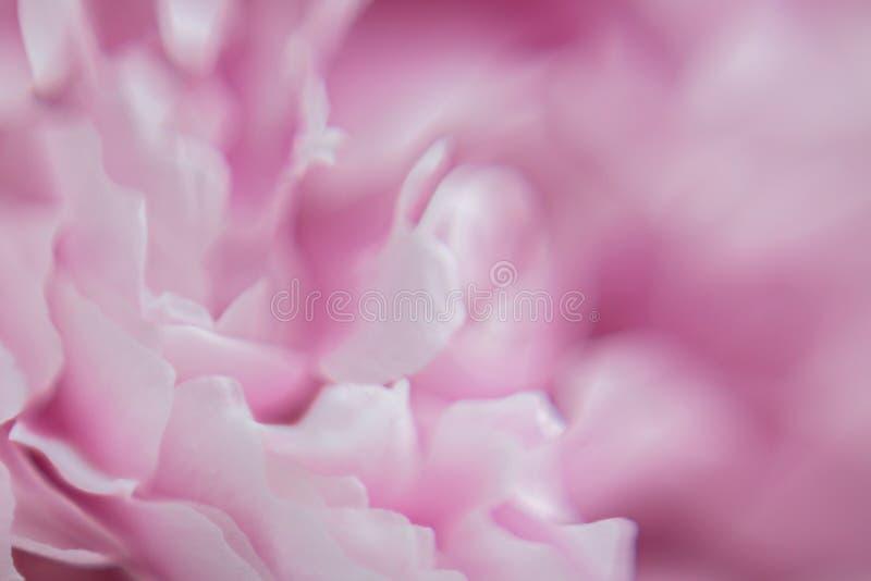 Achtergrond van Roze Bloemen Textuur Macro fotografie royalty-vrije stock afbeelding