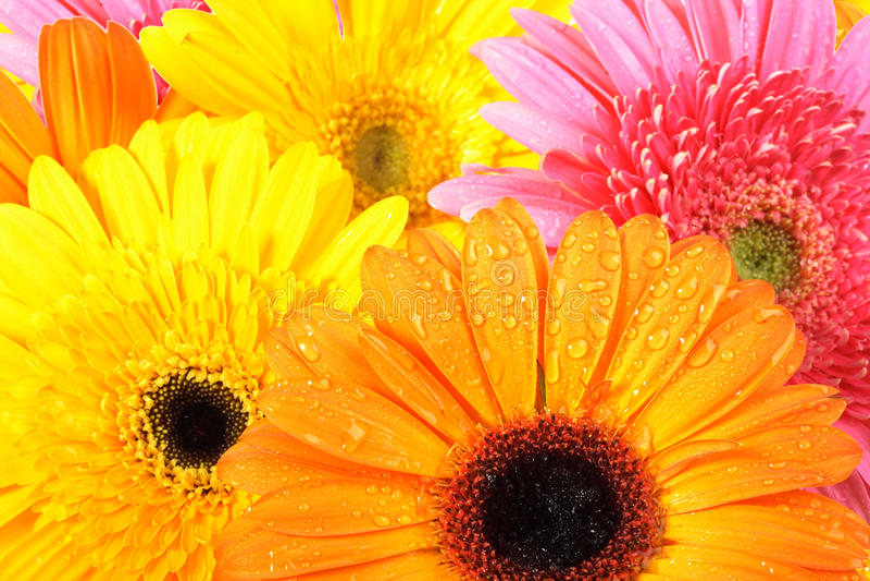 Achtergrond van roze en oranje bloemen royalty-vrije stock foto
