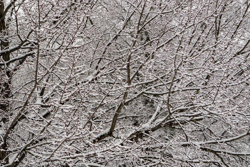 Achtergrond van sneeuw behandelde bomen royalty-vrije stock afbeelding