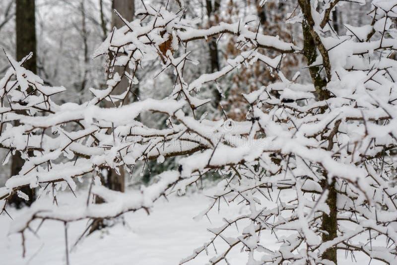 Achtergrond van sneeuw behandelde bomen stock foto's