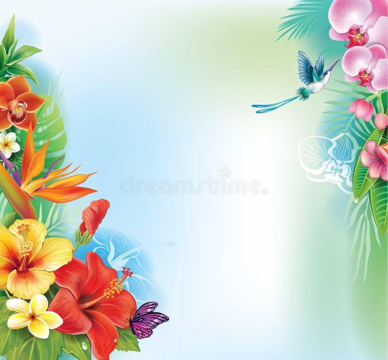 Achtergrond van tropische bloemen royalty-vrije illustratie