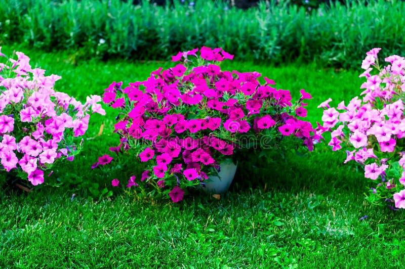 Achtergrond van tuinontwerp Modellerend in park met purpere bloemen, natuurlijk licht, exemplaarruimte, stock foto's