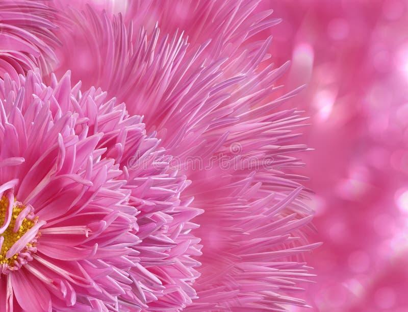 Achtergrond van waterverf de bloemenlpink De bloemblaadjes van de asterbloem op bokeh roze achtergrond stock fotografie