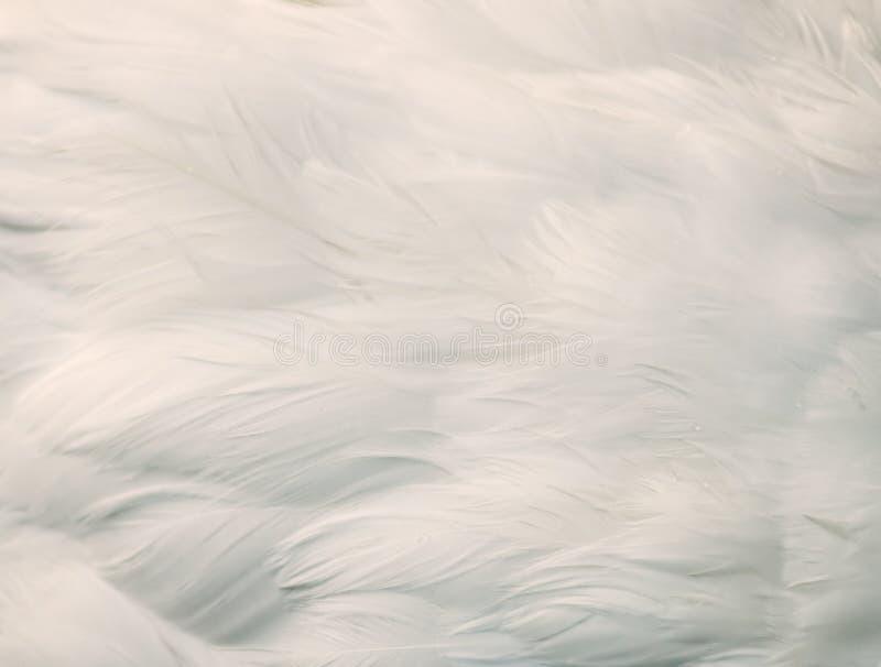 Achtergrond van witte veren stock fotografie