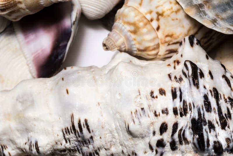 Achtergrond van zeeschelpen van de verschillende macro van het kleurenclose-up De textuur van de weekdierzeeschelp stock foto's