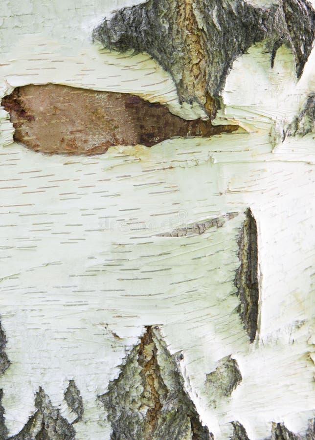 achtergrondboomberkeschors op een stuk van hout stock foto