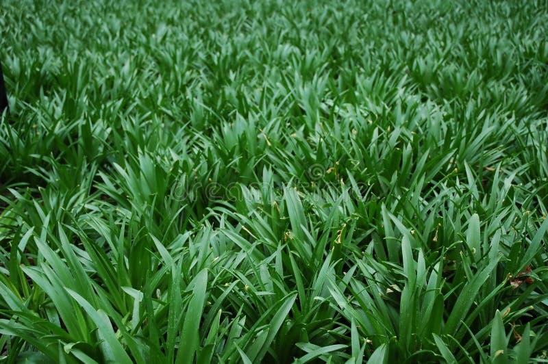 Achtergronden - Gras stock afbeeldingen