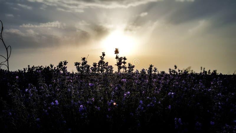 Achtergronden: zon licht royalty-vrije stock foto