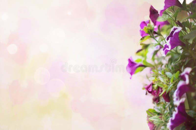 Achtergrondgrens van de Petunia-bloem royalty-vrije stock fotografie