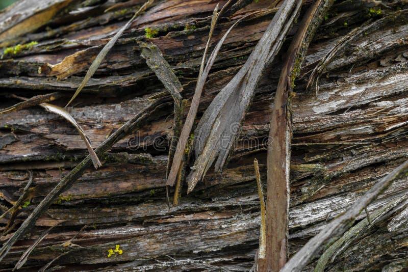 Achtergrondoppervlakte van zeer oude die boomschors met groen mos wordt behandeld royalty-vrije stock foto's