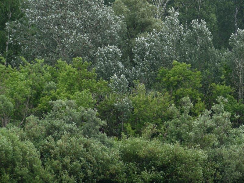 Achtergrondtextuur van bladeren en takken van struiken en bomen van verschillende schaduwen van groen royalty-vrije stock fotografie